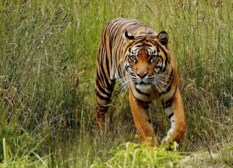 Découvrir des exceptionnels sites touristiques lors d'un séjour en Inde