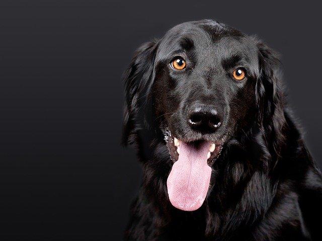 Choisir la bonne pension pour chiens pour les vacances